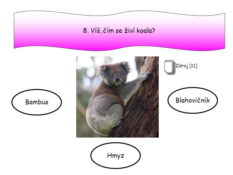 8. Víš, čím se živí koala Zdroj [11] Blahovičník Bambus Hmyz